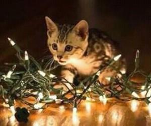 christmas, miau, and cat image