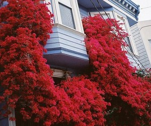 red, flowers, and house image