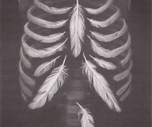 feather, skeleton, and bones image