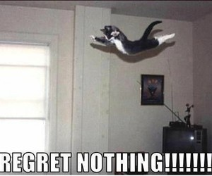 cat, funny, and regret image