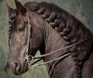 horse, beautiful, and animal image