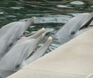 dolphin, happy, and inspiration image