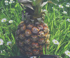 pineapple image