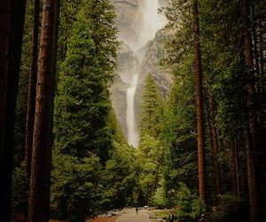 nature, california, and trees image