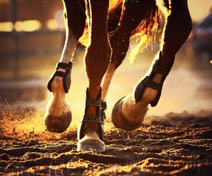 dressage, horse, and horses image
