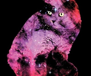 cat, galaxy, and stars image
