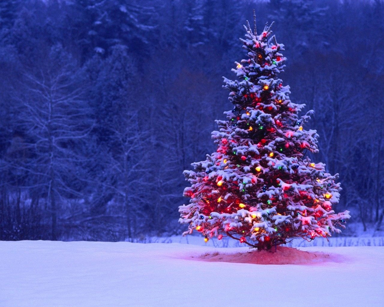 snow christmas tree wallpaper 844820 wallbasecc - Snow Christmas Tree