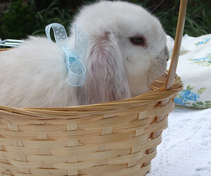 bow, bunny, and white image