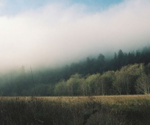 nature, clouds, and forest image