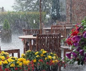 rain and flowers image