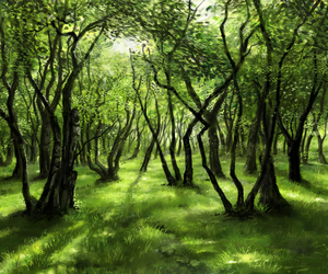 beautiful, forest, and green image