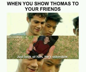 thomas, Minho, and newt image