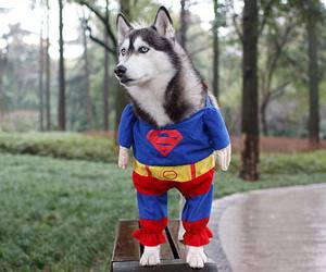 dog and superman image