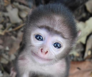 monkey and cute image