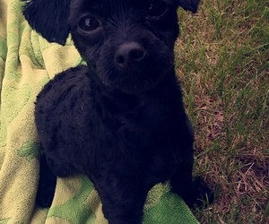 black, puppy, and dog image