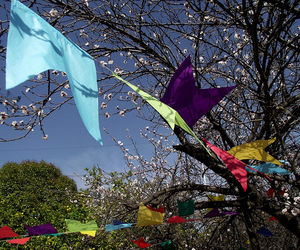 blue, flags, and flowers image