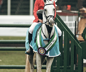 bro, equestrian, and show jumper image