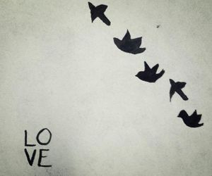 love, bird, and free image