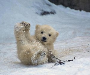 cute, bear, and animal image