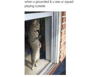 cat and squad image