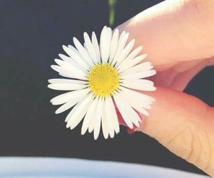 flower, small, and summer image