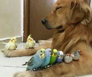dog, bird, and animal image