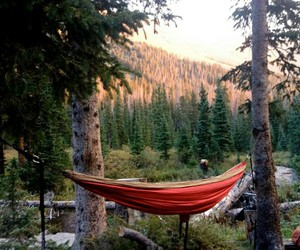 nature, forest, and hammock image