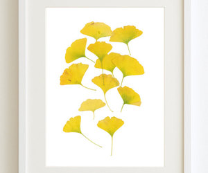 ginkgo leaves, download print, and ginkgo print image