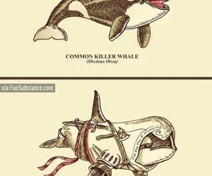 killer whale, funny, and lol image
