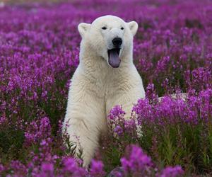 bear, animal, and flowers image