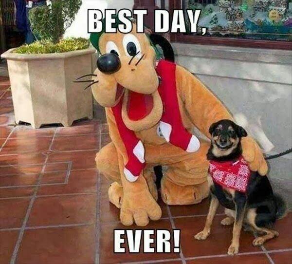dog, funny, and disney image