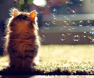 animal, bubbles, and cat image