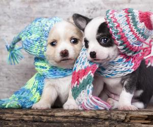 dogs and cute image