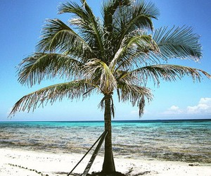 beach, palm, and summer image