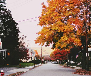 autumn, fall, and street image