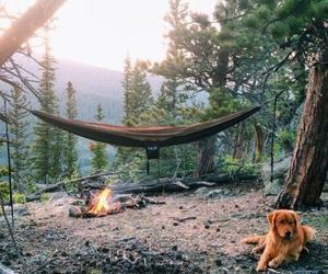 dog, nature, and camping image