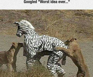 funny, animal, and ideas image
