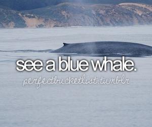 blue whale image