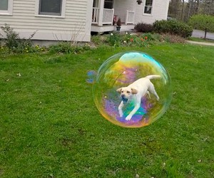 dog, bubbles, and animal image