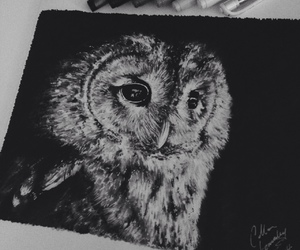 black, draw, and owl image