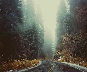 forest, road, and photography image