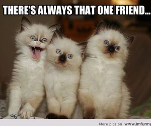 cat, friends, and funny image
