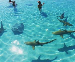 shark, summer, and sea image