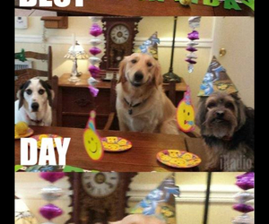 birthday, funny, and best day ever image