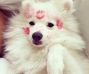 dog, cute, and kiss image