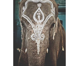 elephant, animal, and india image