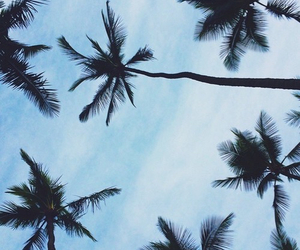 palm trees, summer, and sky image