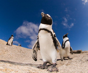 photography and penguin image