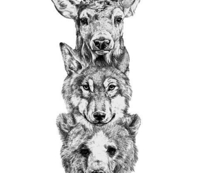 wolf, animal, and bear image