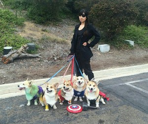 costumes and dogs image